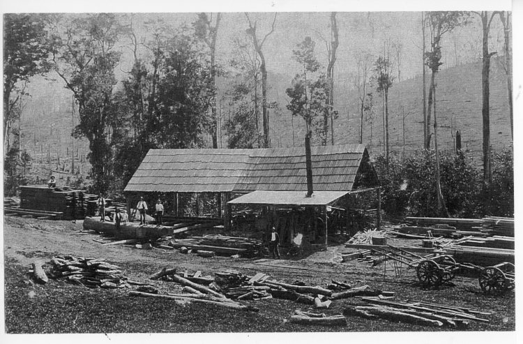Brooloo Sawmill - Gympie Regional Libraries collection