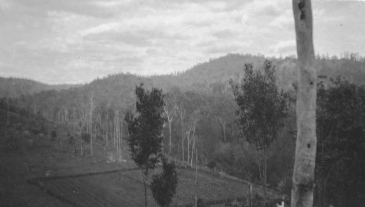 Fred Lewis farm, Amamoor - donated by Pat Towner