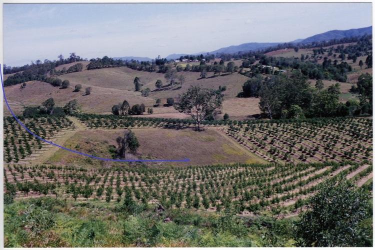 Farm at Amamoor - donated by Cacilia Michalowitz