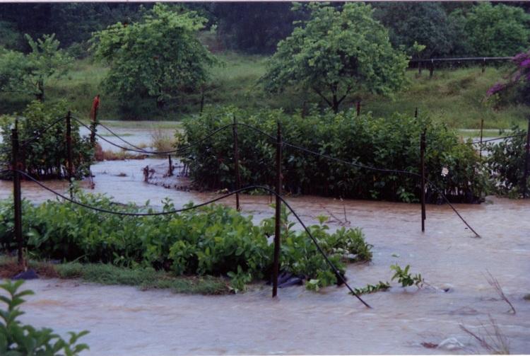 Flood at farm at Amamoor - donated by Cacilia Michalowitz