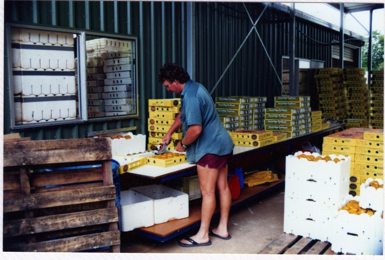 Packing fruit at farm at Amamoor - donated by Cacilia Michalowitz