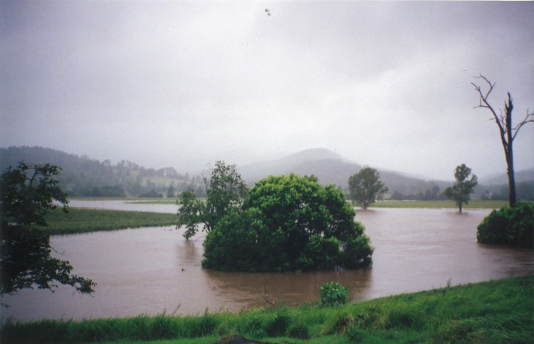 Flood - Imbil - donated by Kaili Parker-Price